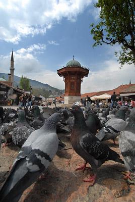 Sarajevski-Sebilj-m.jpg