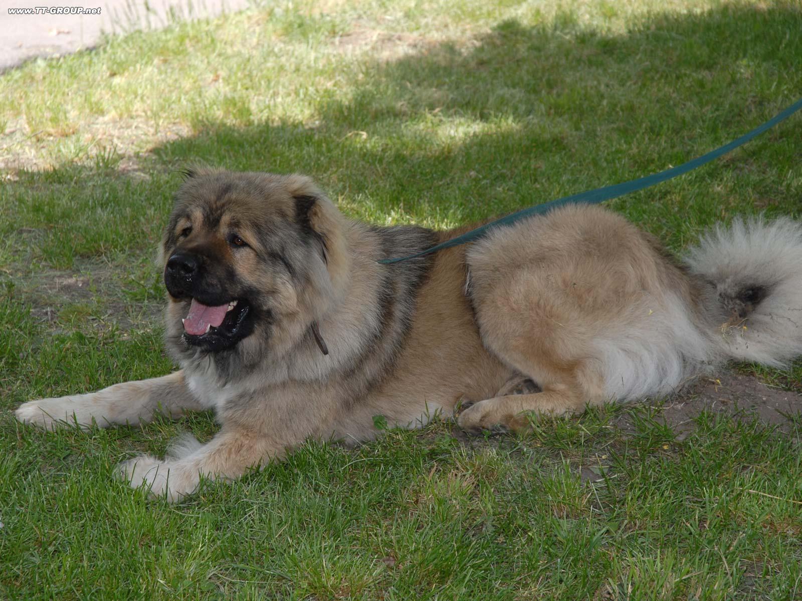Slika snažnog službenog psa