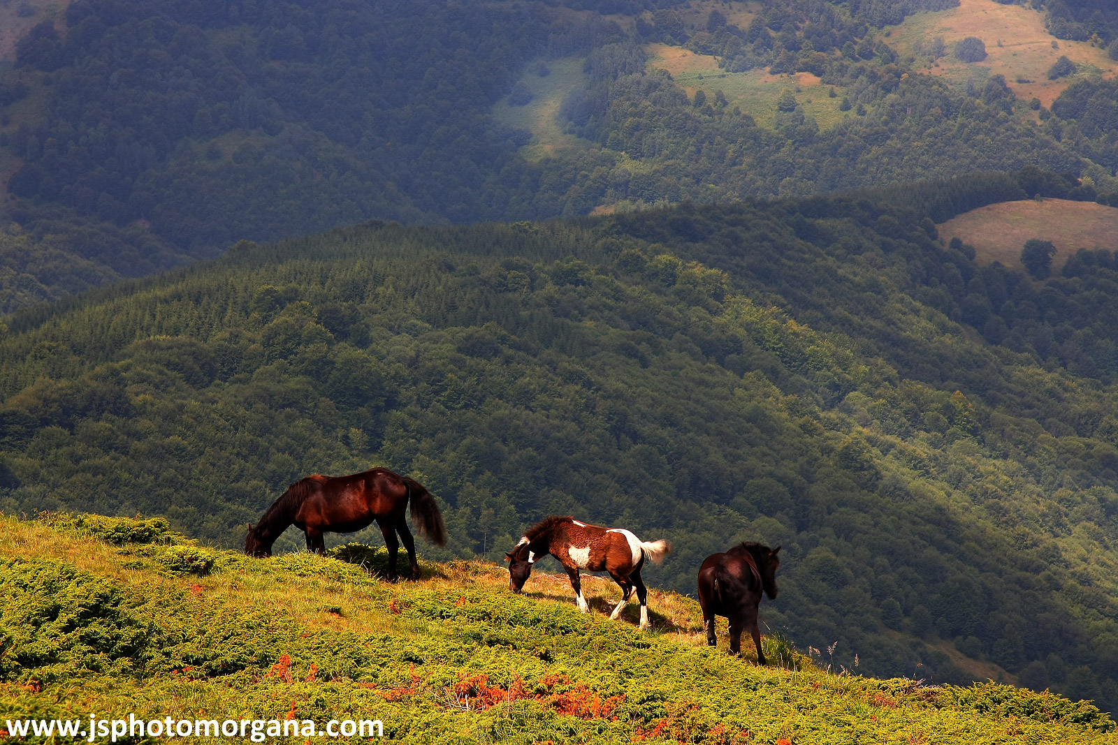Divlji konji na Staroj planini