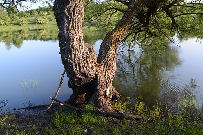 Romantični detalj sa jezera. Drvo u vodi, jezero Vrmdža, slika iz opštine Sokobanja, Jugoistočna Srbija.