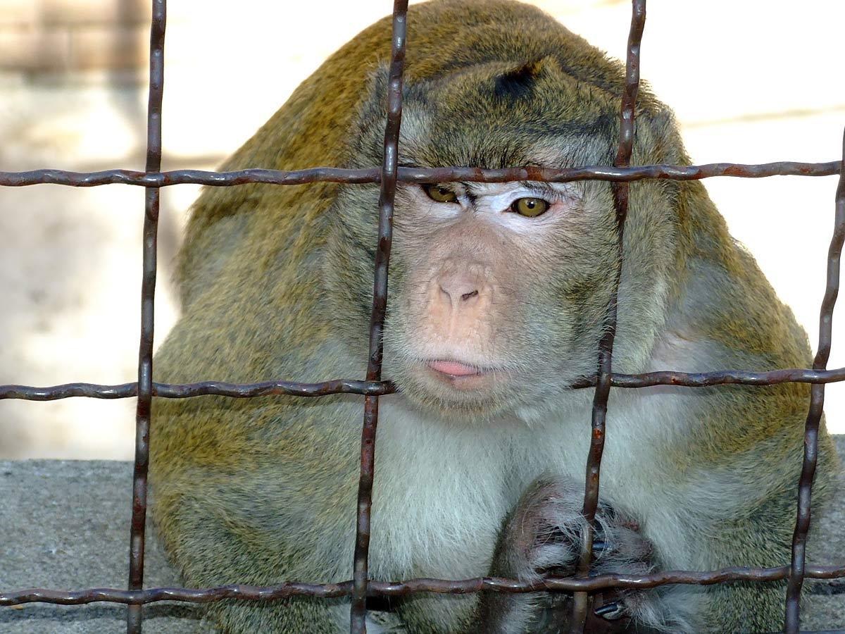 Majmun na mreži kaveza
